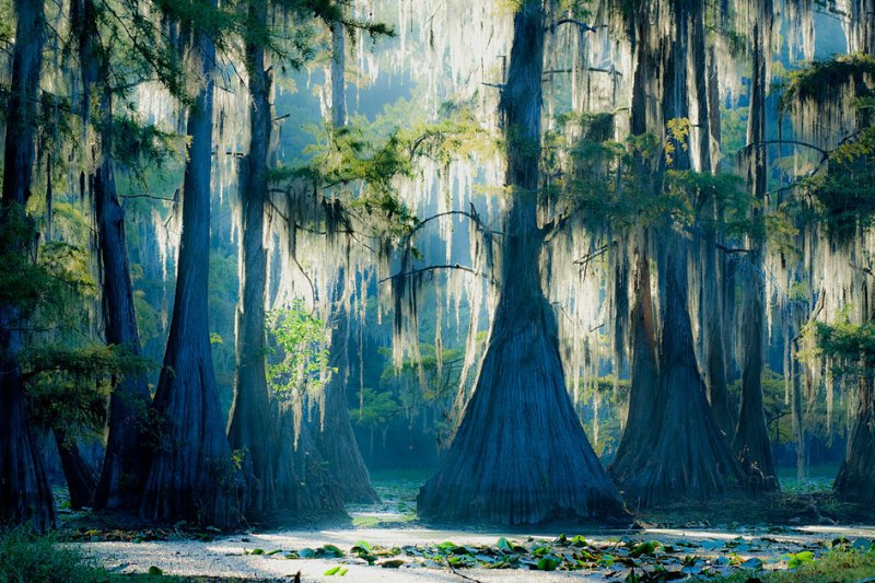 Caddo lake wedding